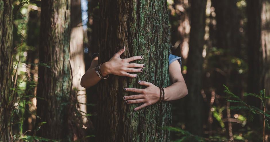 Arboterapia: la importancia de abrazar un árbol