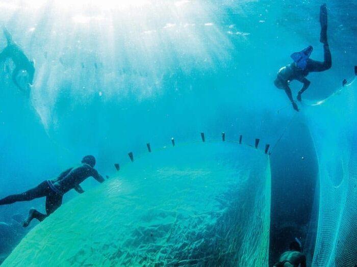 #Biodiversidad: Lanzan iniciativa mundial para acabar con la basura marina y limpiar los océanos