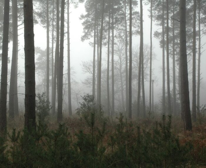 #Biodiversidad: Bosques y los servicios ecosistémicos que ofrecen a la humanidad