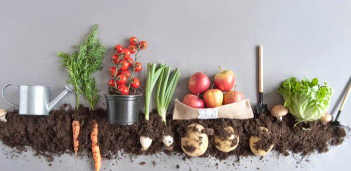 #DíaDeLaTierra: los secretos del paso a paso para hacer compost en casa
