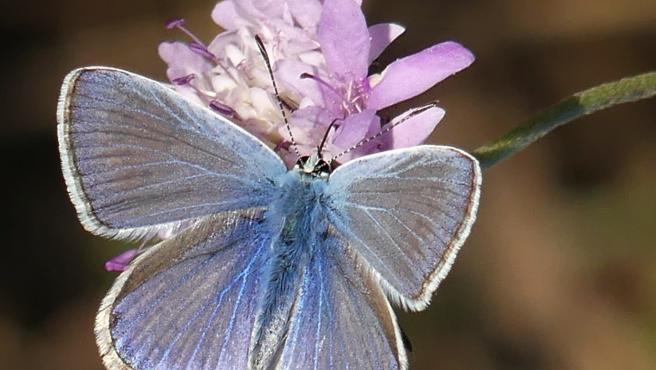#Biodiversidad: Los parques sin riegos ni herbicidas tienen más biodiversidad de mariposas