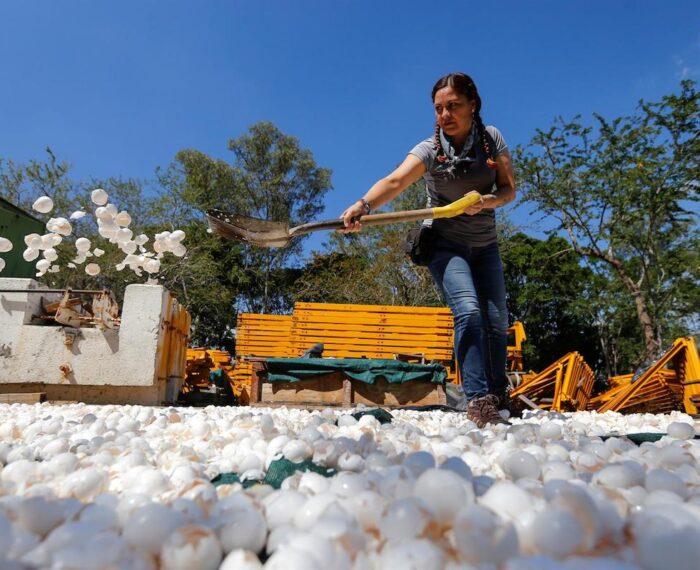 Uno de los ríos más contaminados de México se empezará a limpiar con cáscaras de huevo