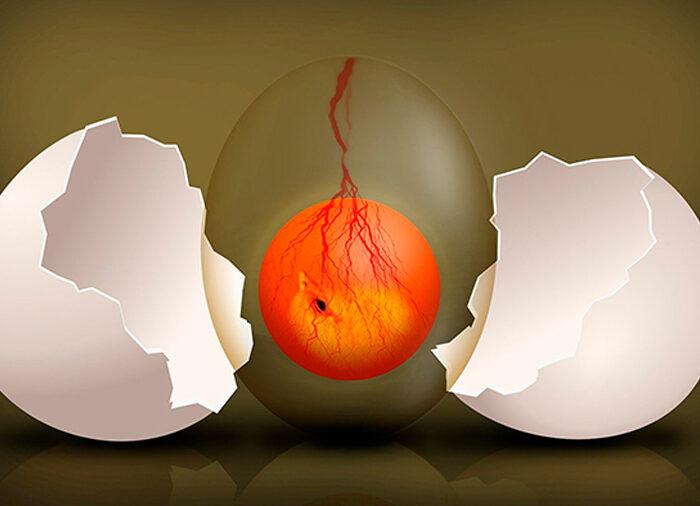 #Biodiversidad: Embriones de muchas especies escuchan para saber del mundo exterior