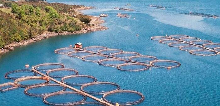 Histórico: Argentina se convirtió en el primer país del mundo en prohibir la cría de salmones