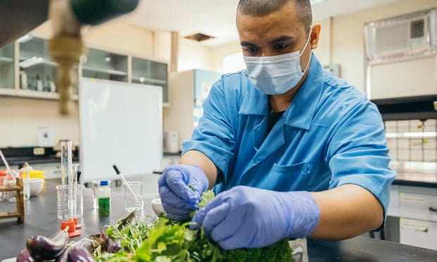 #Sustainability: Invention that makes renewable energy from rotting veg wins James Dyson prize