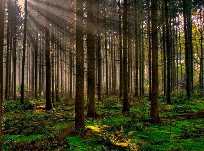 #ClimateChange: How much does planting trees help to combat climate change?