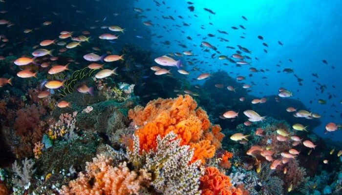 #ClimateChange: Fish adapt to ocean acidification by modifying gene expression