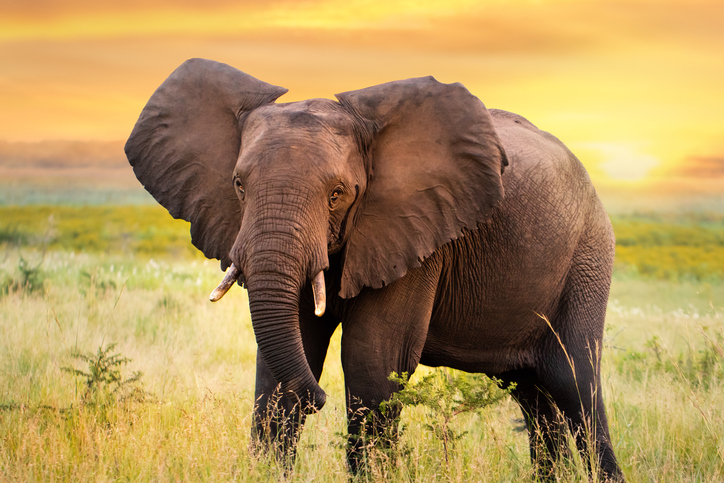#Biodiversity: How an elephant's trunk manipulates air to eat and drink