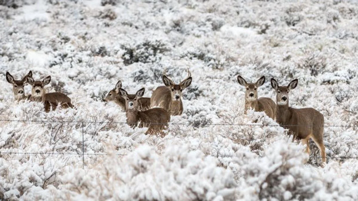 #Biodiversity: How the presence of humans can disturb wildlife up to half a mile away