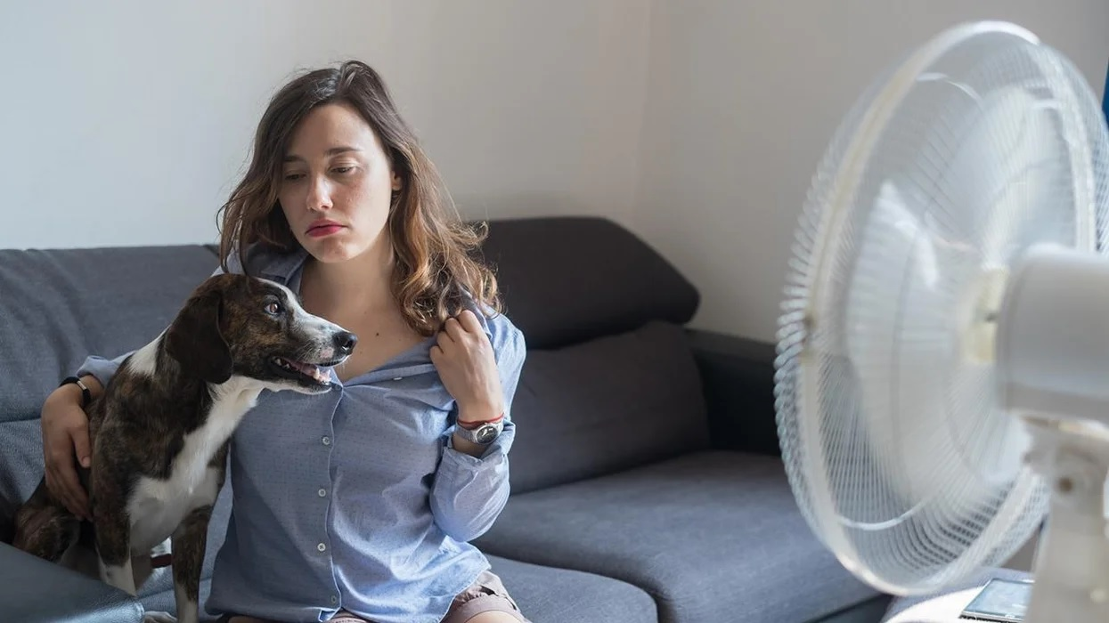 How to protect yourself and your pets in a heat wave